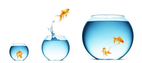 The goldfish bowl of programmatic media buying